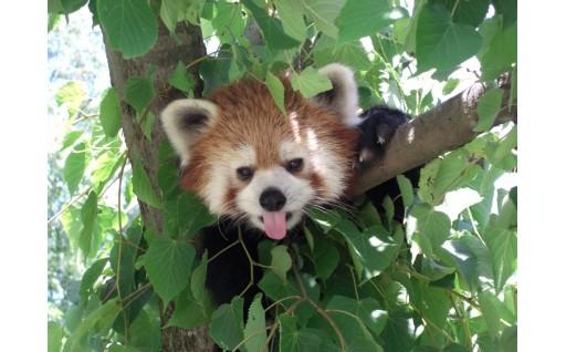 茶臼山動物園再整備プロジェクト