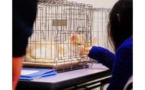動物たちの命を守るプロジェクト
