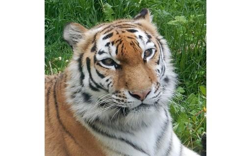 (4)動物園の充実に活用してほしい