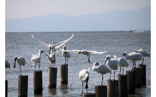 8.ラムサール条約湿地の保全と活用のために
