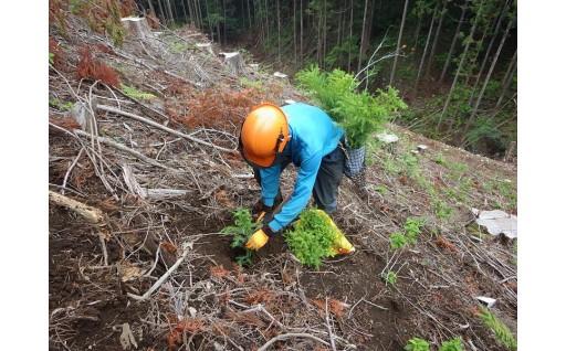 """""""とちぎ""""の森を守り育てます(とちぎの元気な森づくり基金)"""