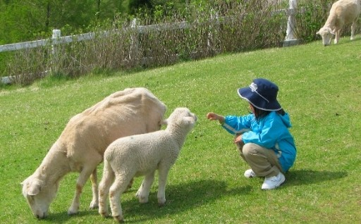 31.羊にも、人にもやさしい六甲山牧場にしよう!!