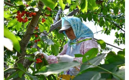 6.ふるさと農業・商工業支援
