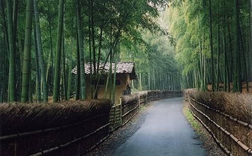 「竹の径」保全整備に係る事業