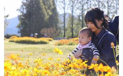 菜の花エコプロジェクト等の環境施策に関する事業(リサイクル日本一のまちの更なる進化)