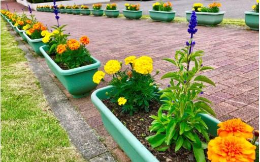5 花で彩るまちづくり事業