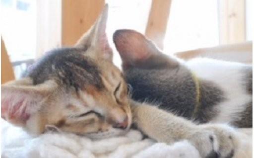 殺処分ゼロを目指す 猫愛護コース