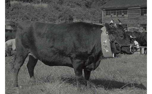 8.日本3大和牛「米沢牛」振興と地域資源循環 プロジェクト