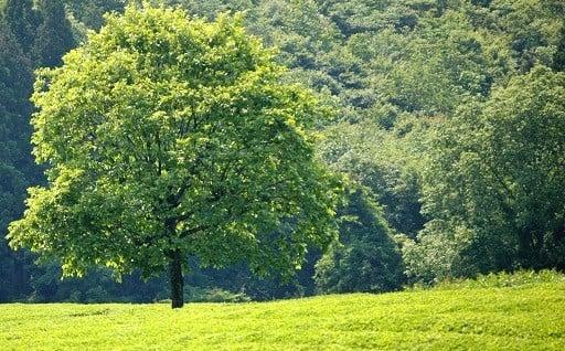 4.豊かで美しい環境を守るまちづくり