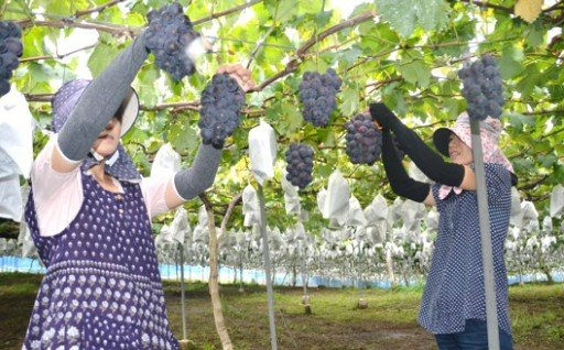 ⑷ 農業振興に関する事業