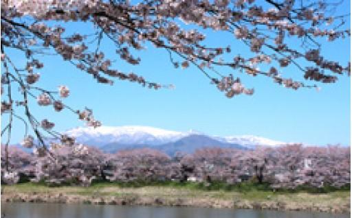 ③一目千本桜の保護