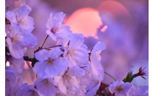 3. 桜を活かしたまちづくり