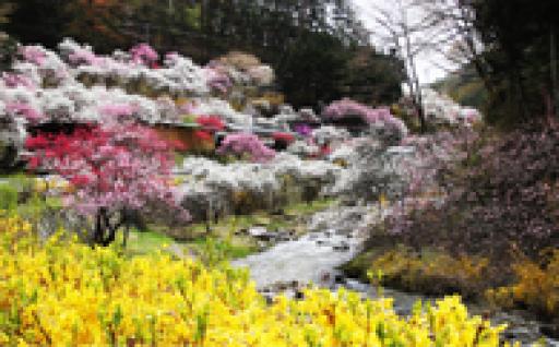 3 自然や景観を守り育てる事業   (自然・景観を保全、育成する事業)