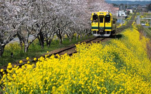 7 いつまでもキハ28が走る景色を守りたい ~いすみ鉄道応援プロジェクト~