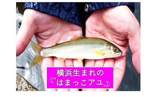 24.アユ・ホタルが棲める水辺を守りたい!(自然豊かな川づくりの推進)