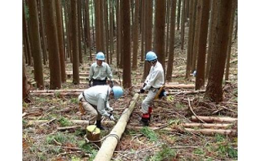 17.道志水源林の保全に協力したい!(横浜市水のふるさと道志の森基金)