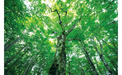 3.自然環境づくり