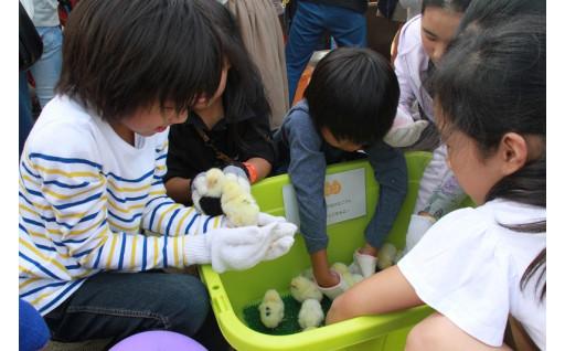 新たな子ども向けイベント等の実施