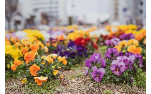 花と緑を増やして、まちの価値向上コース(緑化・美化)