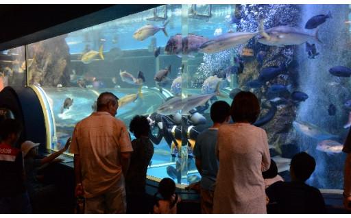 魚津まつり、創立100年を超える魚津水族館など観光振興や地域の賑わいづくり