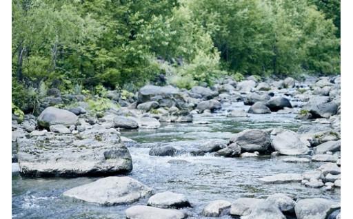 ⑧自然と環境を守るプロジェクト『水と環境を守る森作り事業』