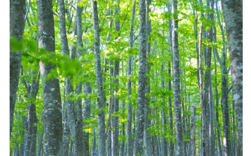豊かな自然環境の保全・活用に