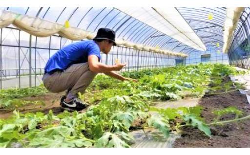 多様な人材を活用した農業を承継する取り組み