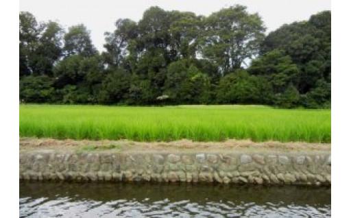 (3)谷保の原風景保全のために