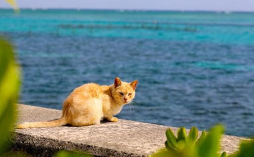 動物の愛護と管理に関する事業