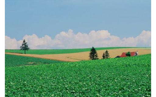 自然環境及び景観の保全、形成に関する事業