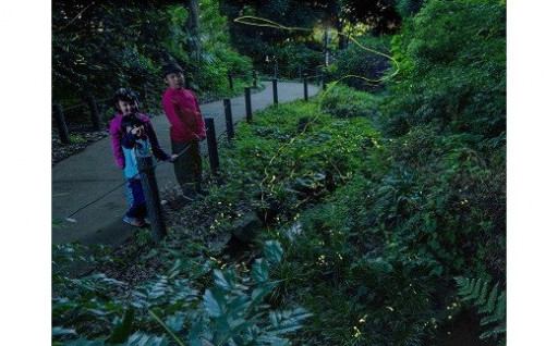 練馬のみどりを守りたい!(練馬みどりの葉っぴい基金) B:中里郷土の森プロジェクト