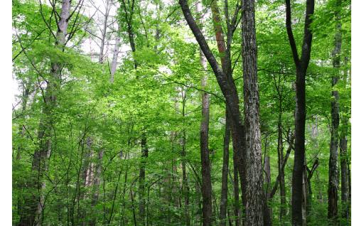 ⑧ 環境保全対策の支援