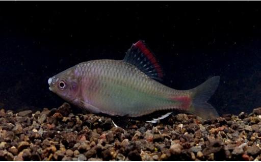 未来へ生物多様性という宝をつなぎたい~絶滅危惧淡水魚保全プロジェクト~