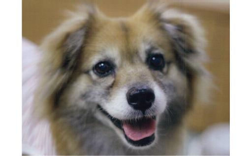 7  「動物愛護寄附金」  人と動物の調和ある共生の実現に向けた取り組みを応援する。