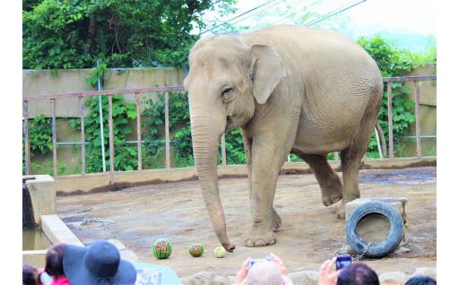 動物園の魅力をバージョンアップ